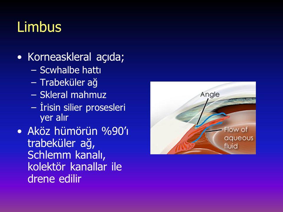 Limbus Korneaskleral açıda; –Scwhalbe hattı –Trabeküler ağ –Skleral mahmuz –İrisin silier prosesleri yer alır Aköz hümörün %90'ı trabeküler ağ, Schlem