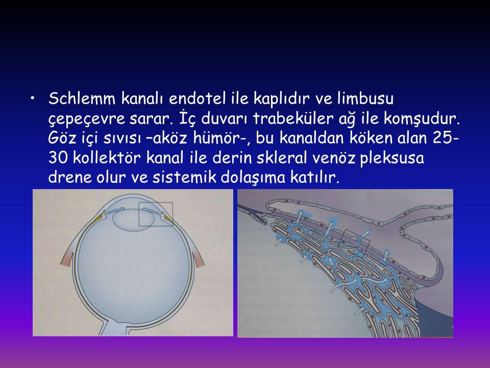 Schlemm kanalı endotel ile kaplıdır ve limbusu çepeçevre sarar. İç duvarı trabeküler ağ ile komşudur. Göz içi sıvısı –aköz hümör-, bu kanaldan köken a
