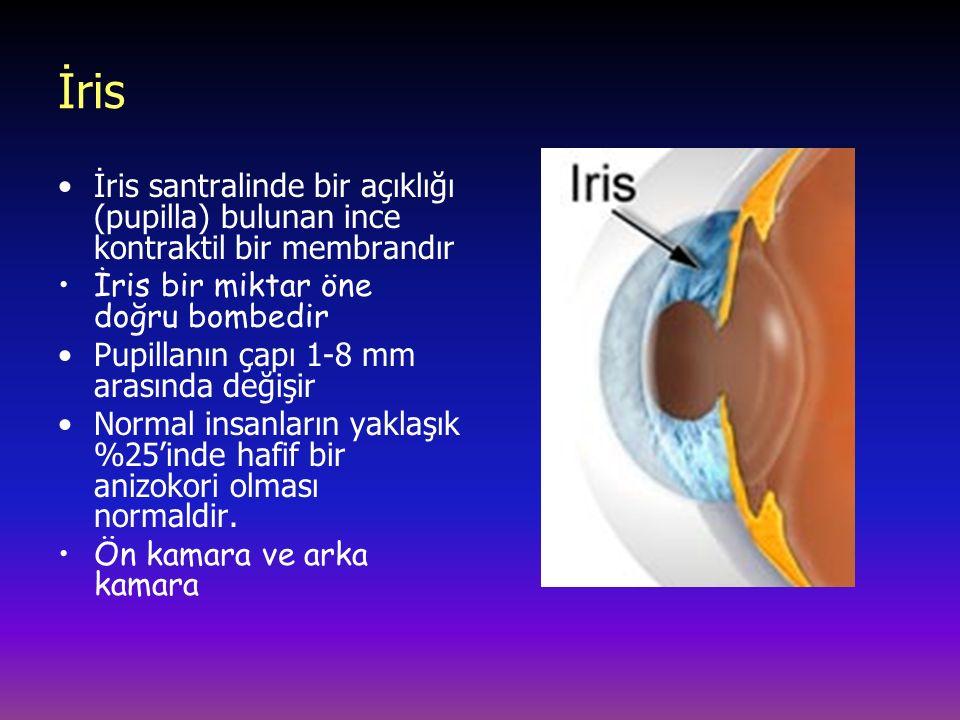 İris İris santralinde bir açıklığı (pupilla) bulunan ince kontraktil bir membrandır İris bir miktar öne doğru bombedir Pupillanın çapı 1-8 mm arasında değişir Normal insanların yaklaşık %25'inde hafif bir anizokori olması normaldir.