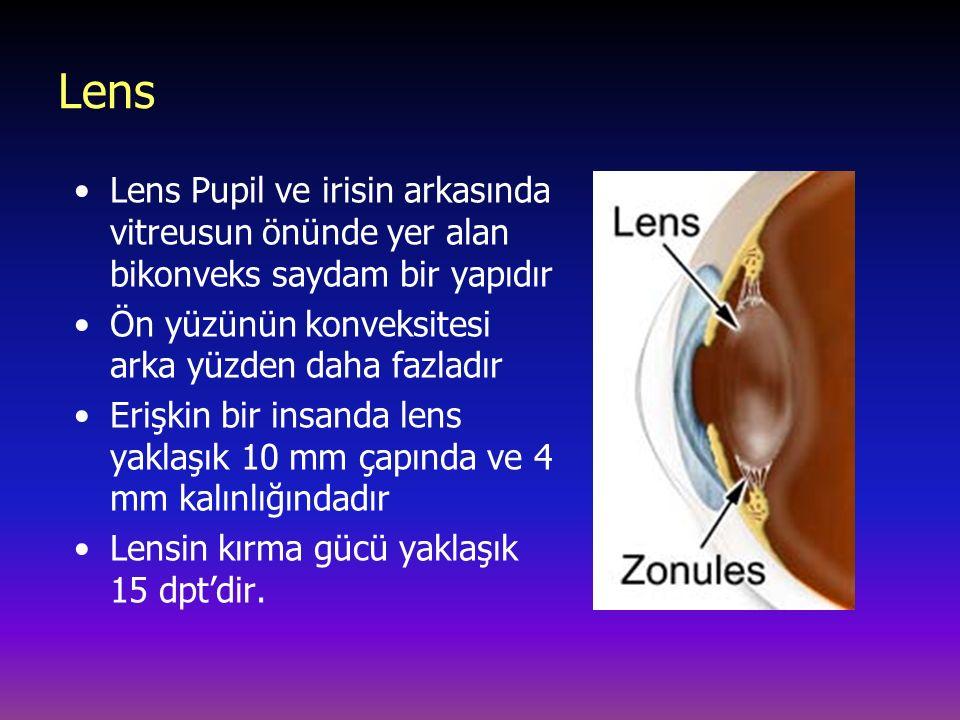 Lens Lens Pupil ve irisin arkasında vitreusun önünde yer alan bikonveks saydam bir yapıdır Ön yüzünün konveksitesi arka yüzden daha fazladır Erişkin bir insanda lens yaklaşık 10 mm çapında ve 4 mm kalınlığındadır Lensin kırma gücü yaklaşık 15 dpt'dir.