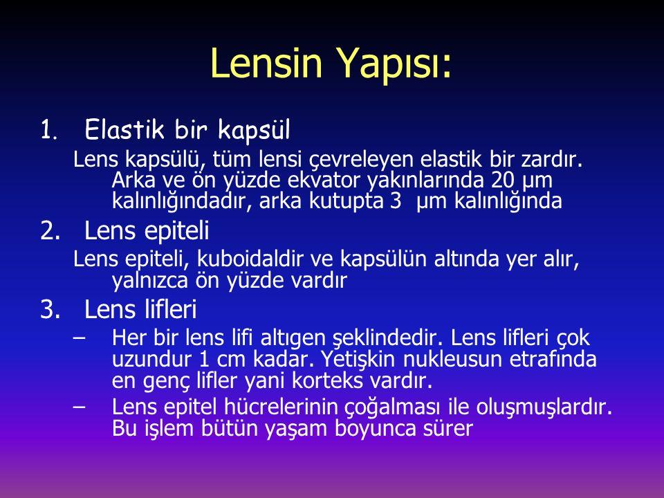 Lensin Yapısı: 1.Elastik bir kapsül Lens kapsülü, tüm lensi çevreleyen elastik bir zardır.