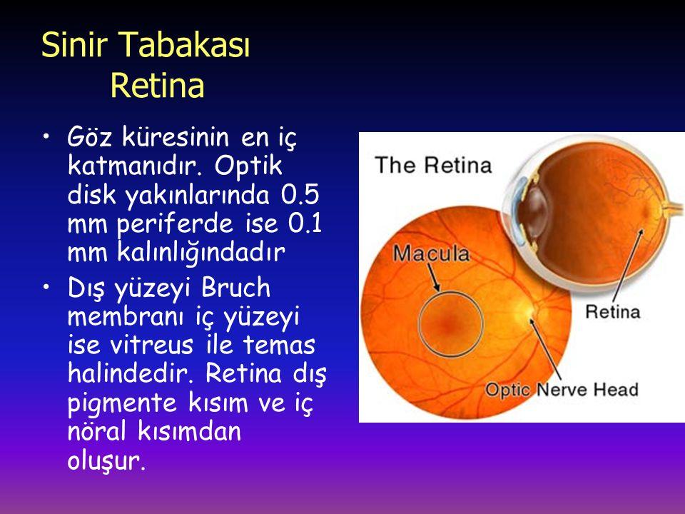 Sinir Tabakası Retina Göz küresinin en iç katmanıdır.