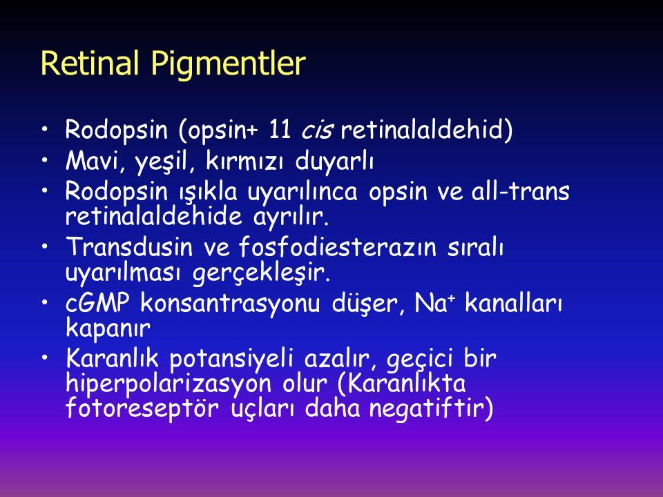Retinal Pigmentler Rodopsin (opsin+ 11 cis retinalaldehid) Mavi, yeşil, kırmızı duyarlı Rodopsin ışıkla uyarılınca opsin ve all-trans retinalaldehide