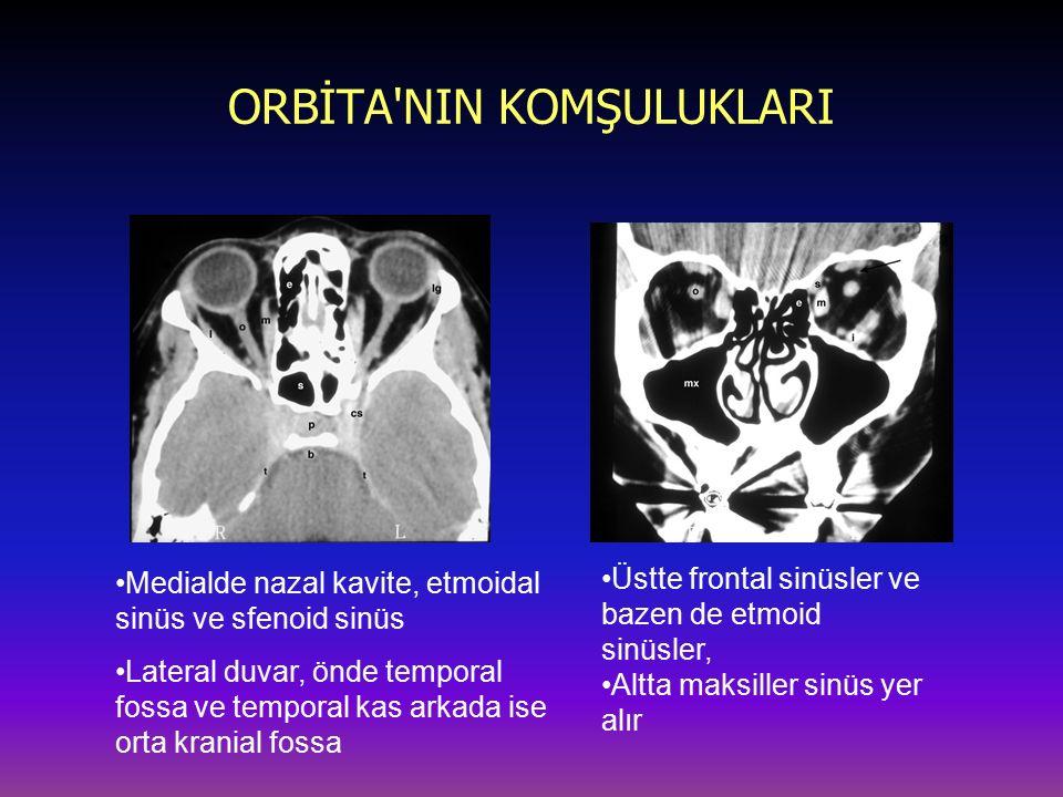 ORBİTA'NIN KOMŞULUKLARI Medialde nazal kavite, etmoidal sinüs ve sfenoid sinüs Lateral duvar, önde temporal fossa ve temporal kas arkada ise orta kran