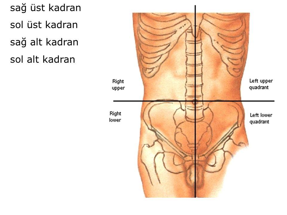 1-Suprakolik bölge Subfrenik aralık (recessus subphrenicus) Subhepatik aralık (recessus subhepaticus) Sağ subhepatik (hepatorenal) aralık (Morrison cebi) Sol subhepatik aralık (Bursa omentalis'e uyar) 2-Infrakolik bölge Sağ infrakolik bölge (radix mesenterii'nin sağ tarafı) Sol infrakolik bölge (radix mesenterii'nin sol tarafı) 3-Pelvis boşluğu 4-Parakolik oluklar (Sulci paracolici) 5-Ekstraperitoneal subfrenik aralık (Area nuda'ya uyar)