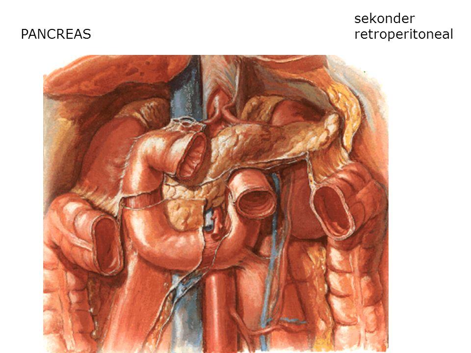 PANCREAS sekonder retroperitoneal