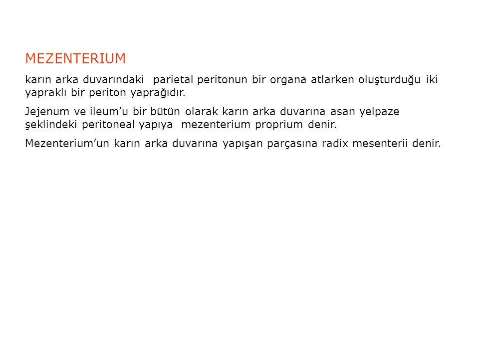 MEZENTERIUM karın arka duvarındaki parietal peritonun bir organa atlarken oluşturduğu iki yapraklı bir periton yaprağıdır.