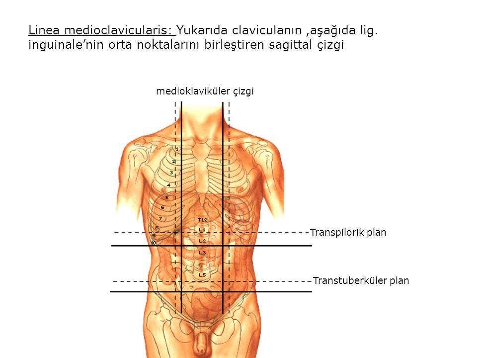 Linea medioclavicularis: Yukarıda claviculanın,aşağıda lig.