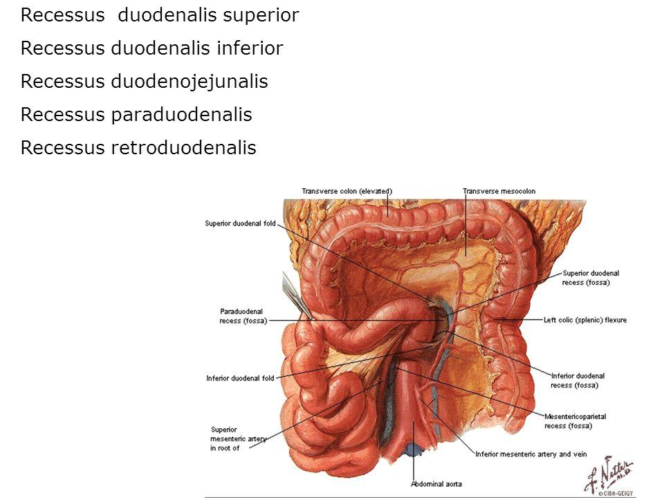 Recessus duodenalis superior Recessus duodenalis inferior Recessus duodenojejunalis Recessus paraduodenalis Recessus retroduodenalis