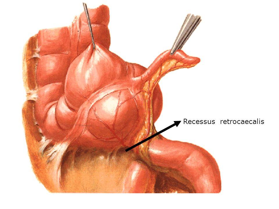 Recessus retrocaecalis