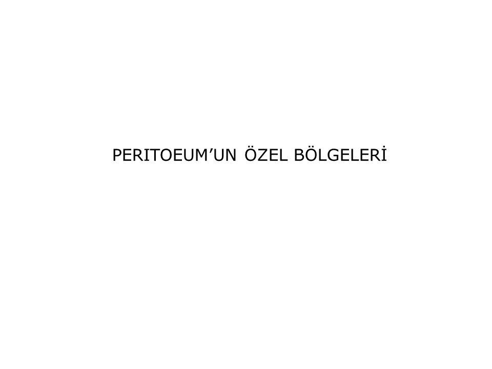 PERITOEUM'UN ÖZEL BÖLGELERİ