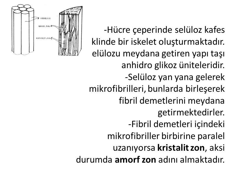 -Hücre çeperinde selüloz kafes şeklinde bir iskelet oluşturmaktadır. -Selülozu meydana getiren yapı taşı anhidro glikoz üniteleridir. -Selüloz yan yan