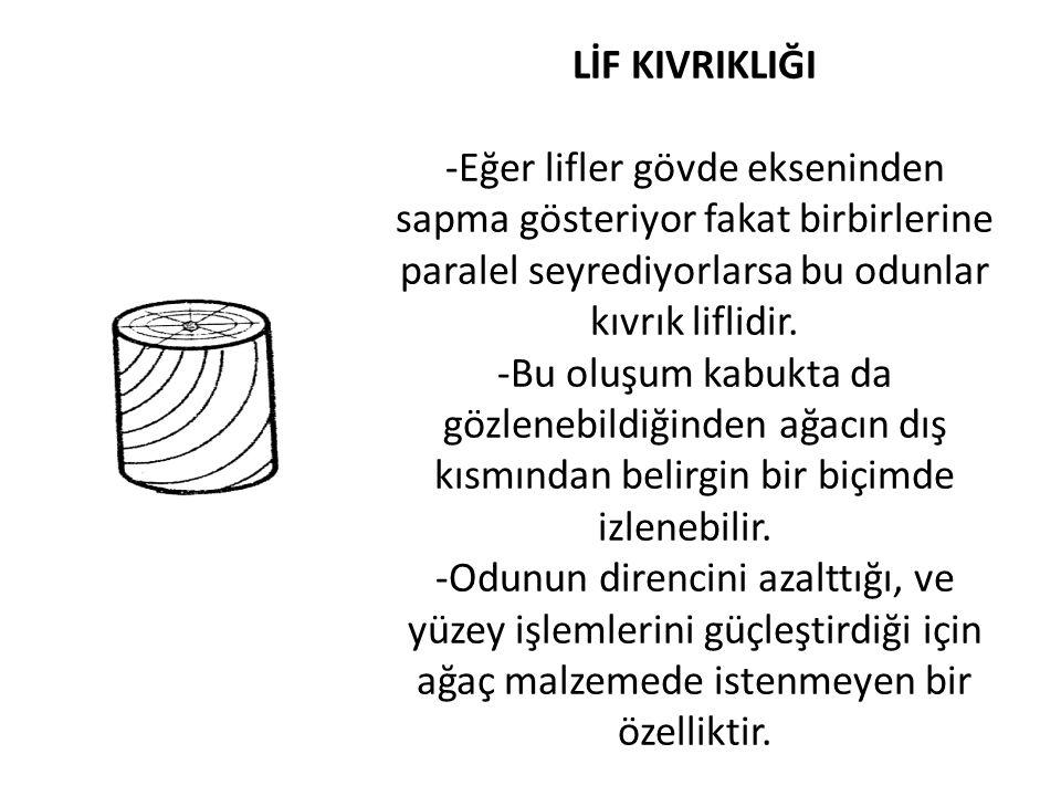 LİF KIVRIKLIĞI -Eğer lifler gövde ekseninden sapma gösteriyor fakat birbirlerine paralel seyrediyorlarsa bu odunlar kıvrık liflidir. -Bu oluşum kabukt