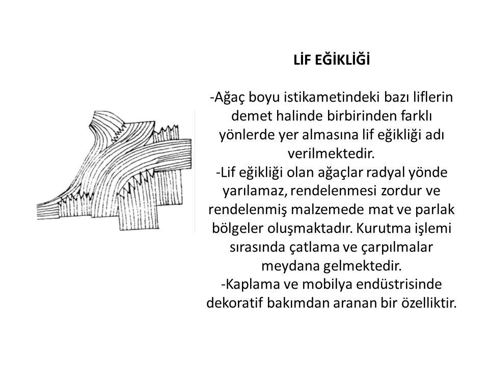 LİF EĞİKLİĞİ -Ağaç boyu istikametindeki bazı liflerin demet halinde birbirinden farklı yönlerde yer almasına lif eğikliği adı verilmektedir. -Lif eğik
