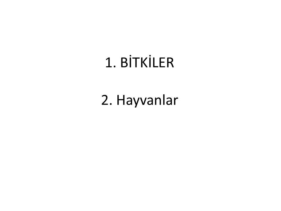 5. İNSANLAR