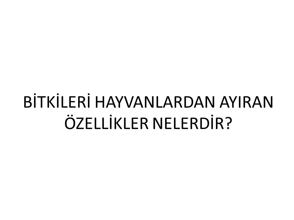 Ahşap Sandık İşlemeciliği Osmanlı Dönemi Ahşap Sandık Ceviz Oymalı Sandık İşlemeli Ahşap Sandık