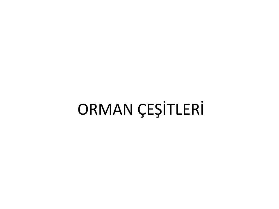 ORMAN ÇEŞİTLERİ