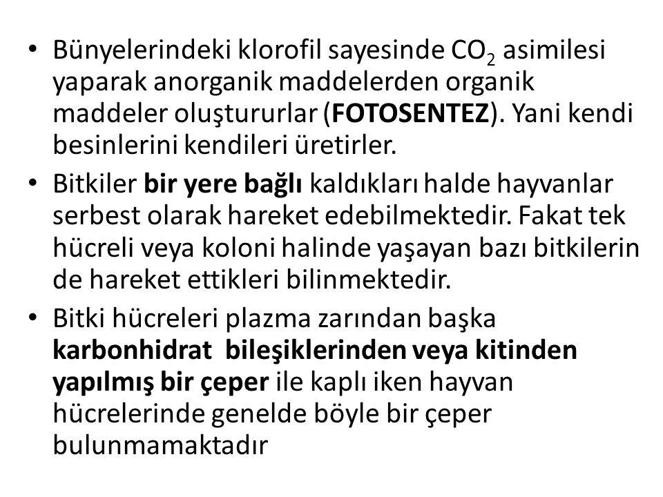 REÇİNE KANALLARI