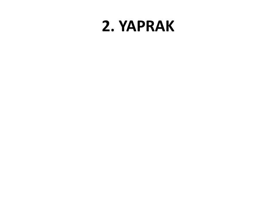 2. YAPRAK