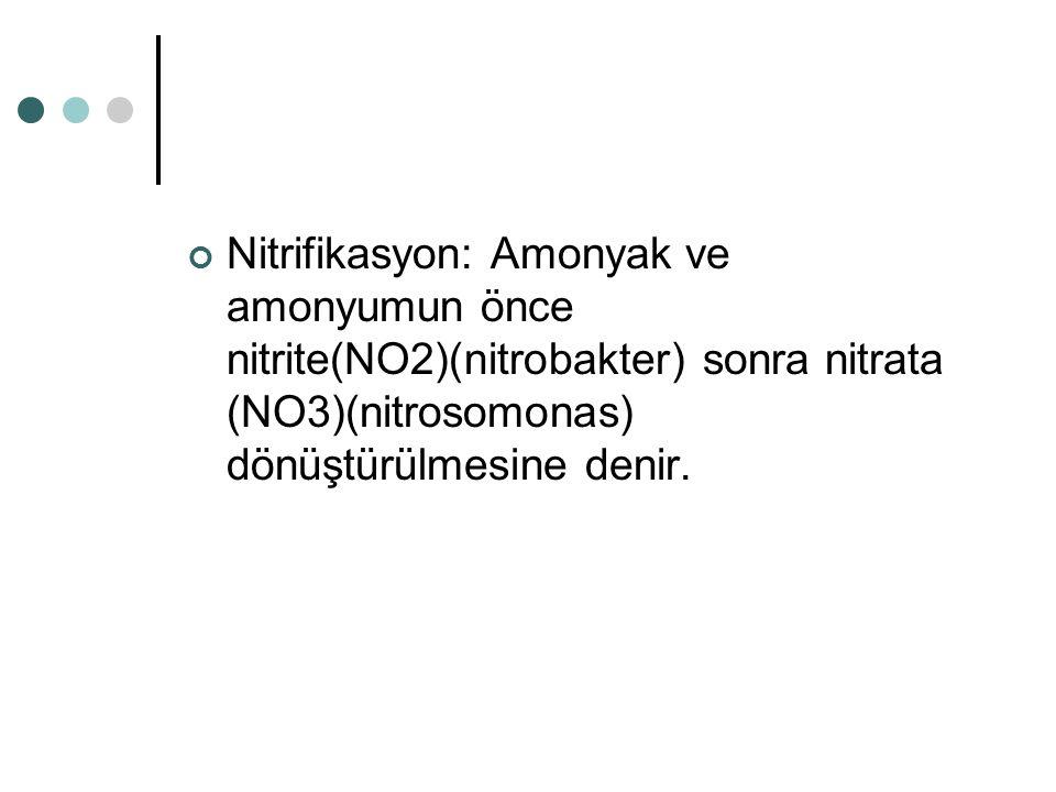 Nitrifikasyon: Amonyak ve amonyumun önce nitrite(NO2)(nitrobakter) sonra nitrata (NO3)(nitrosomonas) dönüştürülmesine denir.