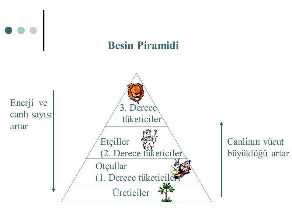 Üreticiler Otçullar (1. Derece tüketiciler) Etçiller (2. Derece tüketiciler 3. Derece tüketiciler Besin Piramidi Canlinın vücut büyüklüğü artar Enerji