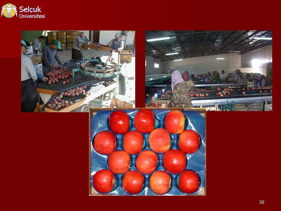Elma üretimi için enerji kullanım etkinliği belirlenmeye çalışılmıştır.