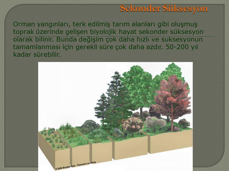 Orman yangınları, terk edilmiş tarım alanları gibi oluşmuş toprak üzerinde gelişen biyolojik hayat sekonder süksesyon olarak bilinir.
