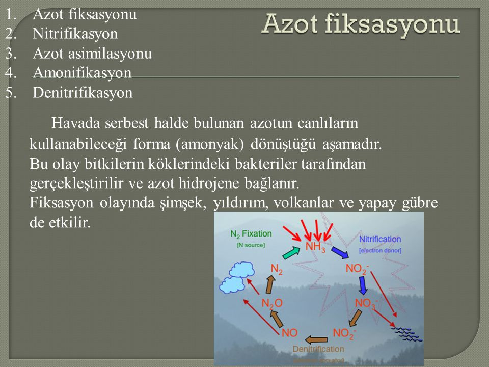 Havada serbest halde bulunan azotun canlıların kullanabileceği forma (amonyak) dönüştüğü aşamadır.