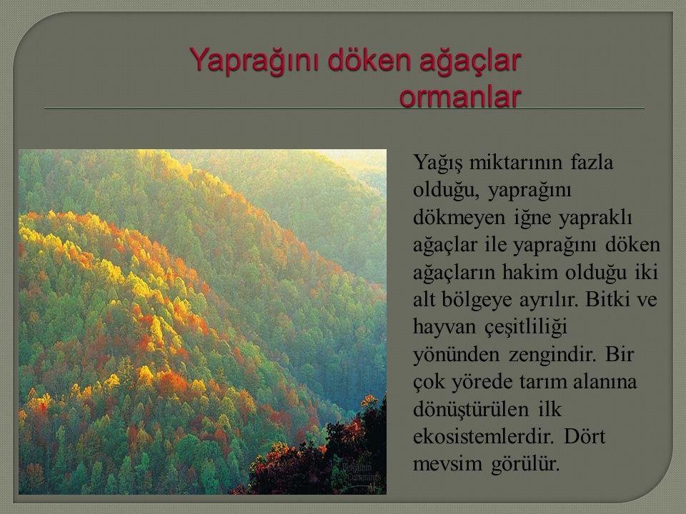 Yağış miktarının fazla olduğu, yaprağını dökmeyen iğne yapraklı ağaçlar ile yaprağını döken ağaçların hakim olduğu iki alt bölgeye ayrılır.