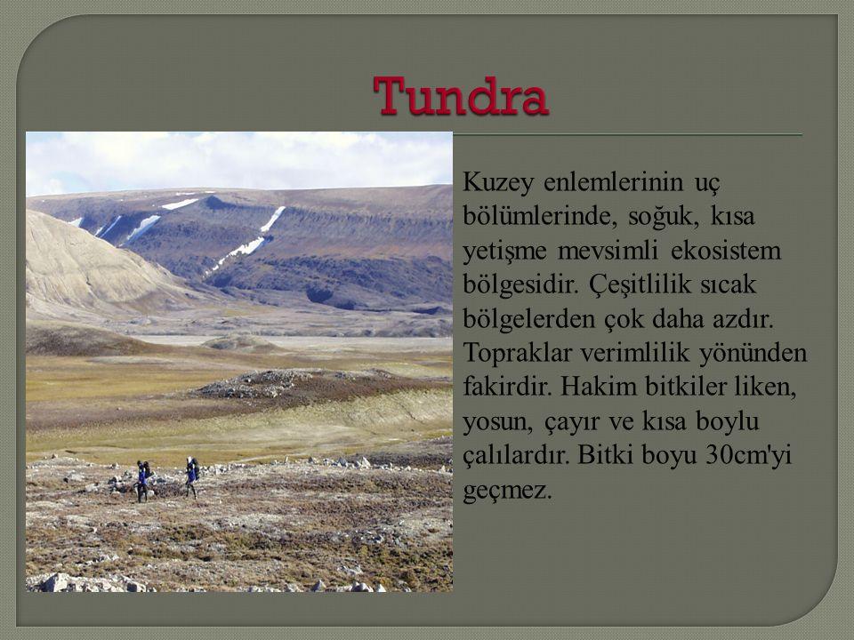 Kuzey enlemlerinin uç bölümlerinde, soğuk, kısa yetişme mevsimli ekosistem bölgesidir.