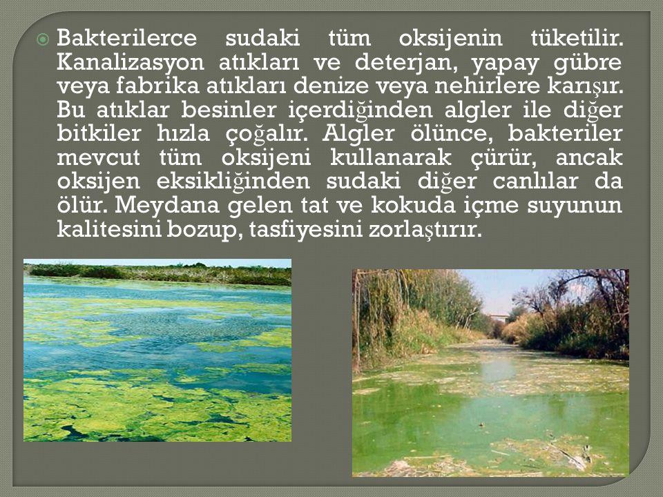  Bakterilerce sudaki tüm oksijenin tüketilir.