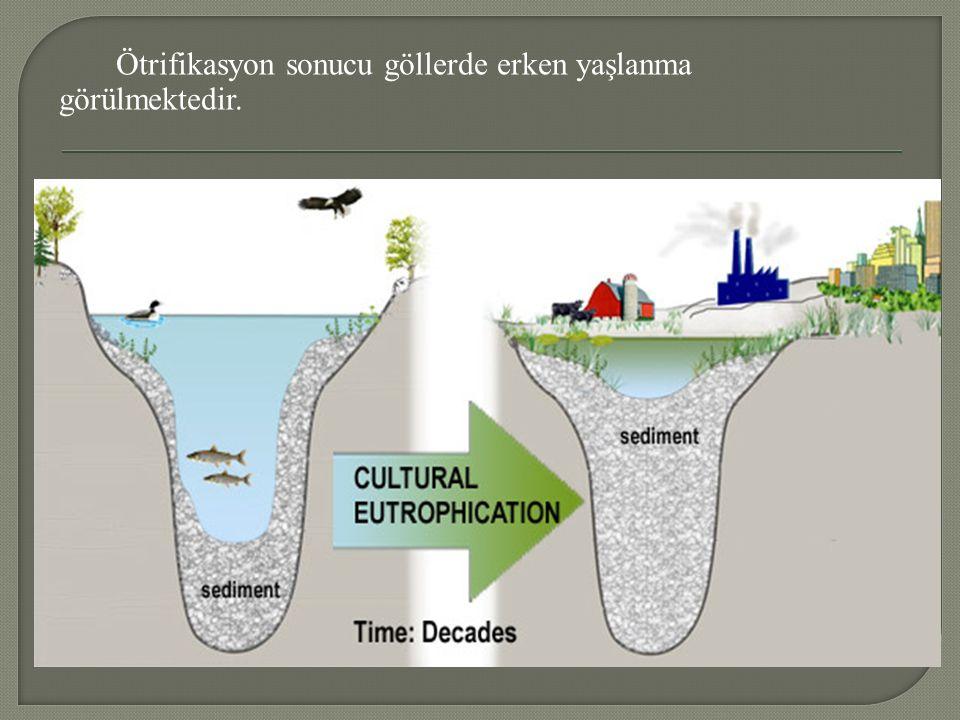 Ötrifikasyon sonucu göllerde erken yaşlanma görülmektedir.