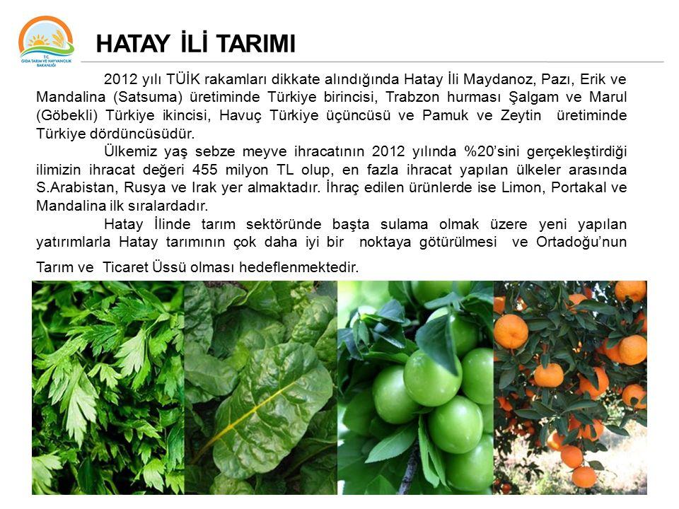 HATAY İLİ TARIMI 2012 yılı TÜİK rakamları dikkate alındığında Hatay İli Maydanoz, Pazı, Erik ve Mandalina (Satsuma) üretiminde Türkiye birincisi, Trabzon hurması Şalgam ve Marul (Göbekli) Türkiye ikincisi, Havuç Türkiye üçüncüsü ve Pamuk ve Zeytin üretiminde Türkiye dördüncüsüdür.