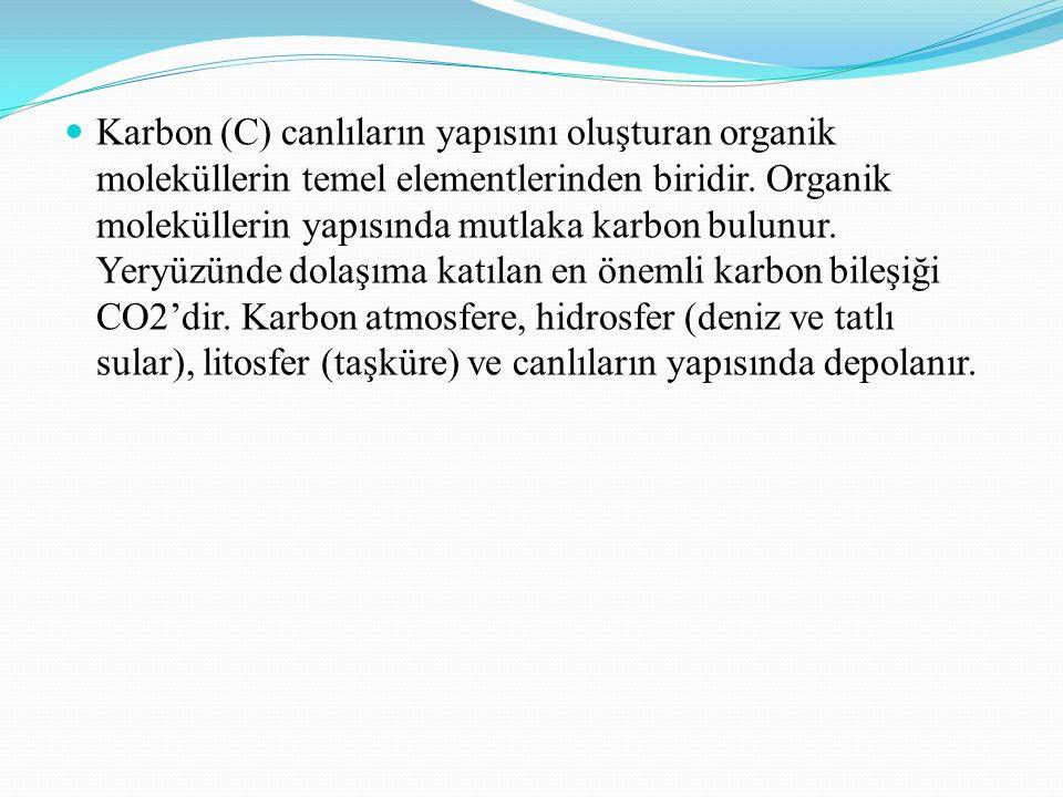 Karbon (C) canlıların yapısını oluşturan organik moleküllerin temel elementlerinden biridir.
