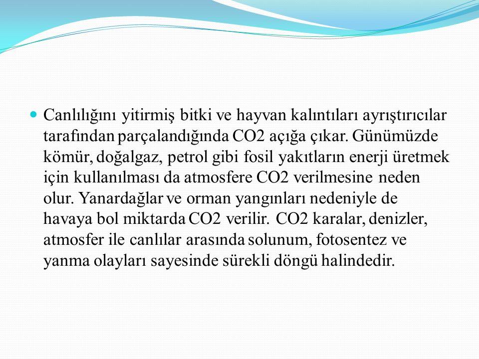 Canlılığını yitirmiş bitki ve hayvan kalıntıları ayrıştırıcılar tarafından parçalandığında CO2 açığa çıkar.