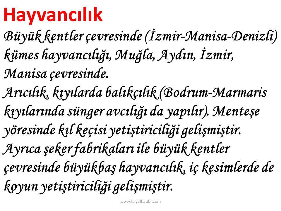 Hayvancılık Büyük kentler çevresinde (İzmir-Manisa-Denizli) kümes hayvancılığı, Muğla, Aydın, İzmir, Manisa çevresinde. Arıcılık, kıyılarda balıkçılık