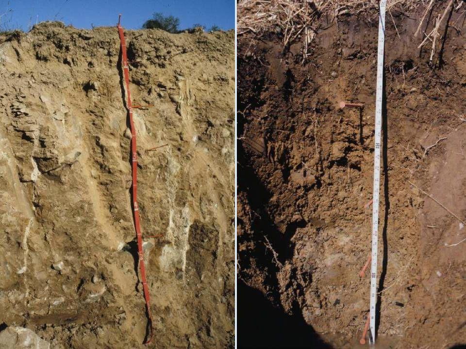 TOPRAK ORGANİK MADDESİNİN ÖNEMİ Toprakta ayrışma olaylarına etkileri Toprakta ayrışma olaylarına etkileri Bazı mineral maddelerin ayrışma hızını arttırır (Kalsit, aragonit, dolomit) Soğuk ve nemli iklimlerde, organik asitler alüminyum ve demiroksitler ile killeri toprak içinde taşıyarak alt horizonlarda biriktirir.