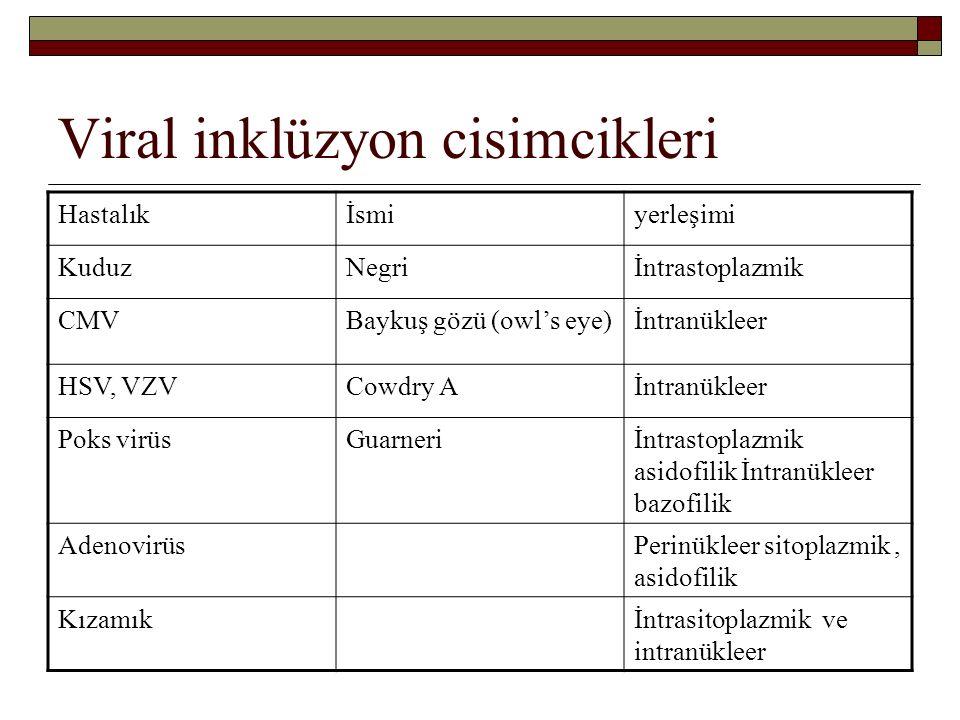 Viral inklüzyon cisimcikleri Hastalıkİsmiyerleşimi KuduzNegriİntrastoplazmik CMVBaykuş gözü (owl's eye)İntranükleer HSV, VZVCowdry Aİntranükleer Poks