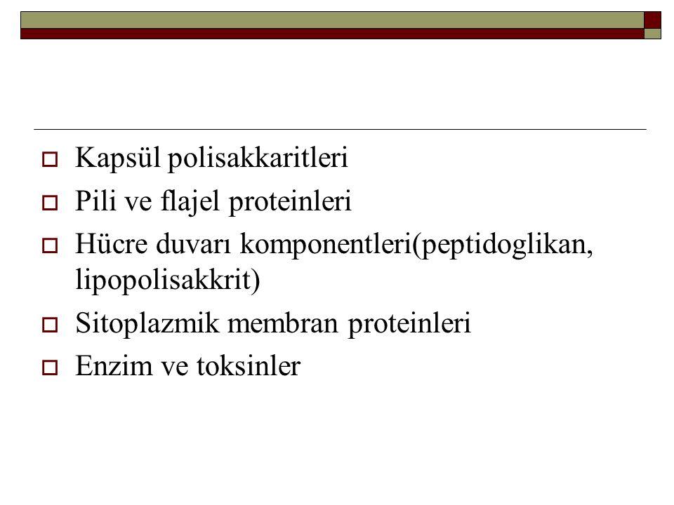  Kapsül polisakkaritleri  Pili ve flajel proteinleri  Hücre duvarı komponentleri(peptidoglikan, lipopolisakkrit)  Sitoplazmik membran proteinleri  Enzim ve toksinler