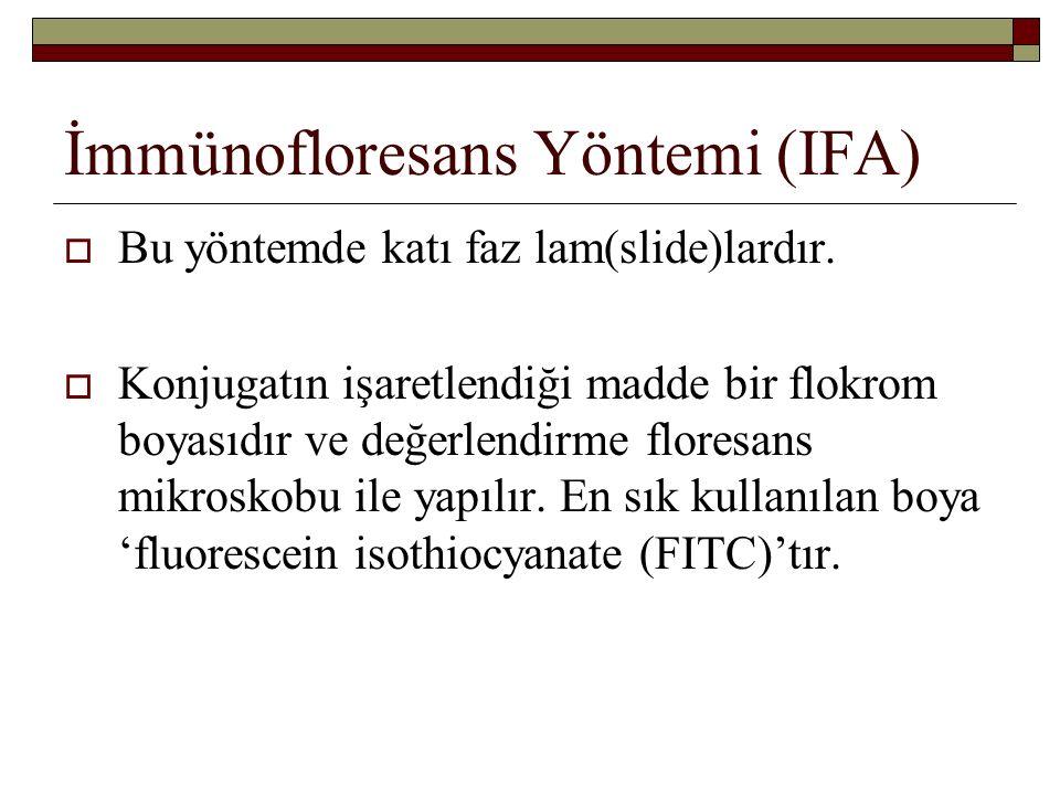 İmmünofloresans Yöntemi (IFA)  Bu yöntemde katı faz lam(slide)lardır.
