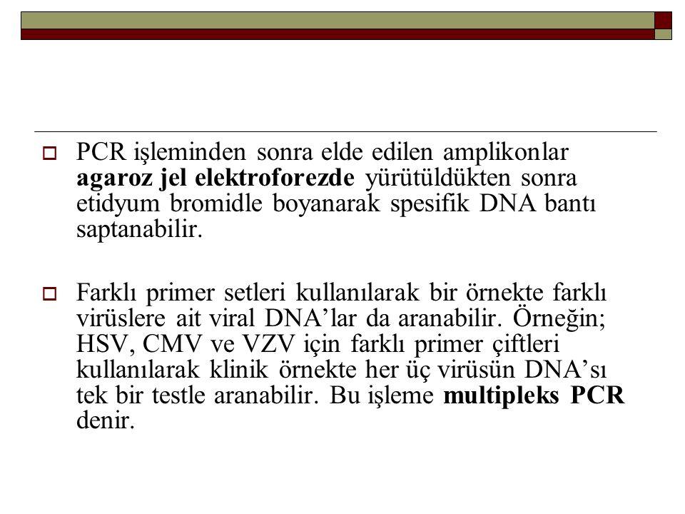  PCR işleminden sonra elde edilen amplikonlar agaroz jel elektroforezde yürütüldükten sonra etidyum bromidle boyanarak spesifik DNA bantı saptanabilir.