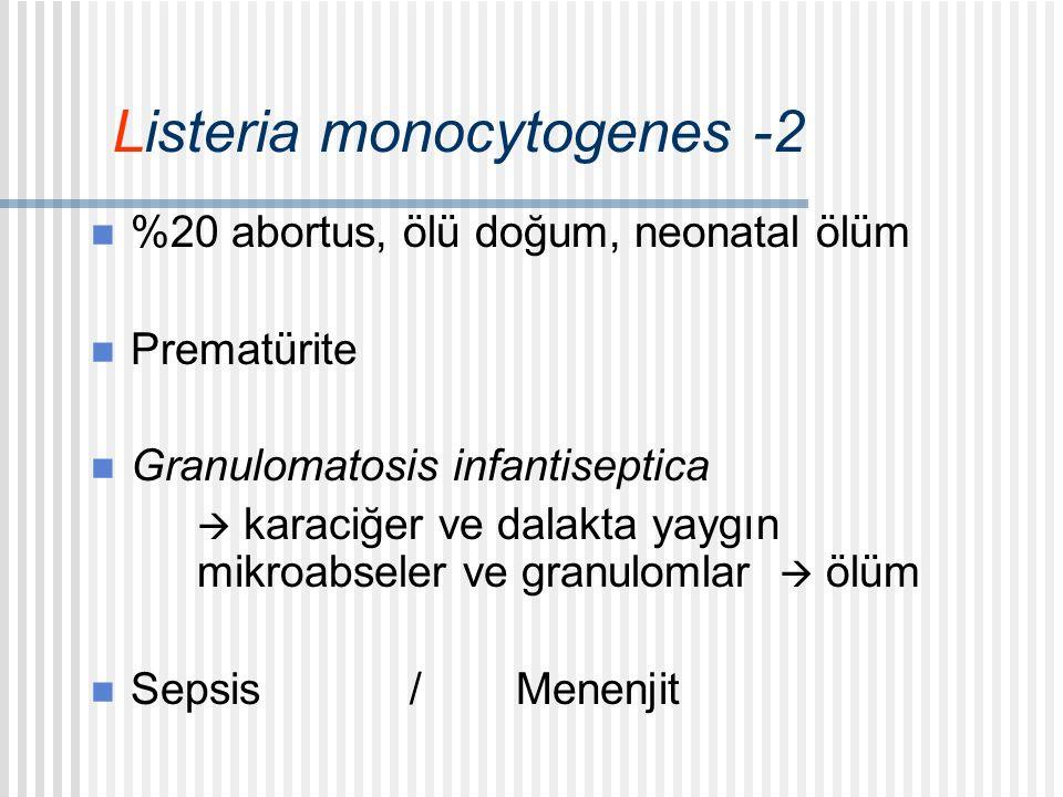 Listeria monocytogenes -2 %20 abortus, ölü doğum, neonatal ölüm Prematürite Granulomatosis infantiseptica  karaciğer ve dalakta yaygın mikroabseler ve granulomlar  ölüm Sepsis/Menenjit