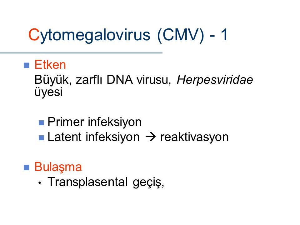 Cytomegalovirus (CMV) - 1 Etken Büyük, zarflı DNA virusu, Herpesviridae üyesi Primer infeksiyon Latent infeksiyon  reaktivasyon Bulaşma Transplasental geçiş,