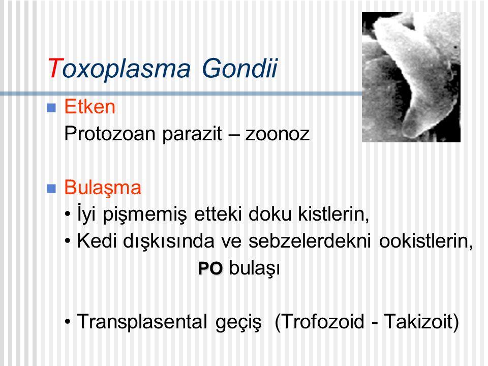 Toxoplasma Gondii Etken Protozoan parazit – zoonoz Bulaşma İyi pişmemiş etteki doku kistlerin, Kedi dışkısında ve sebzelerdekni ookistlerin, PO PO bulaşı Transplasental geçiş (Trofozoid - Takizoit)