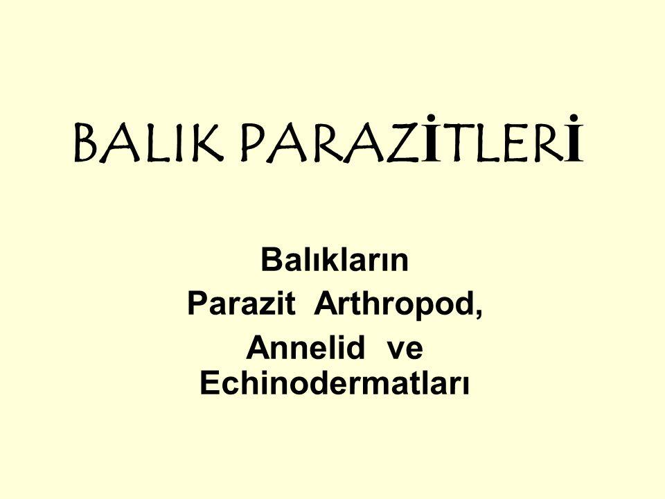 BALIK PARAZİTLERİ Balıkların Parazit Arthropod, Annelid ve Echinodermatları