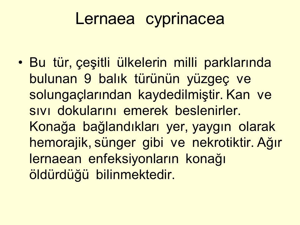 Lernaea cyprinacea Bu tür, çeşitli ülkelerin milli parklarında bulunan 9 balık türünün yüzgeç ve solungaçlarından kaydedilmiştir. Kan ve sıvı dokuları