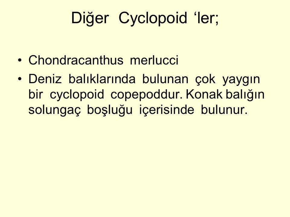 Diğer Cyclopoid 'ler; Chondracanthus merlucci Deniz balıklarında bulunan çok yaygın bir cyclopoid copepoddur. Konak balığın solungaç boşluğu içerisind