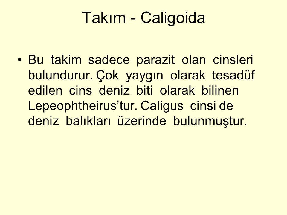 Takım - Caligoida Bu takim sadece parazit olan cinsleri bulundurur.