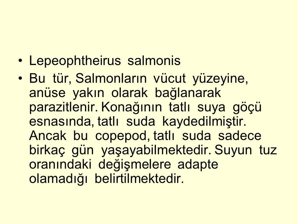 Lepeophtheirus salmonis Bu tür, Salmonların vücut yüzeyine, anüse yakın olarak bağlanarak parazitlenir. Konağının tatlı suya göçü esnasında, tatlı sud