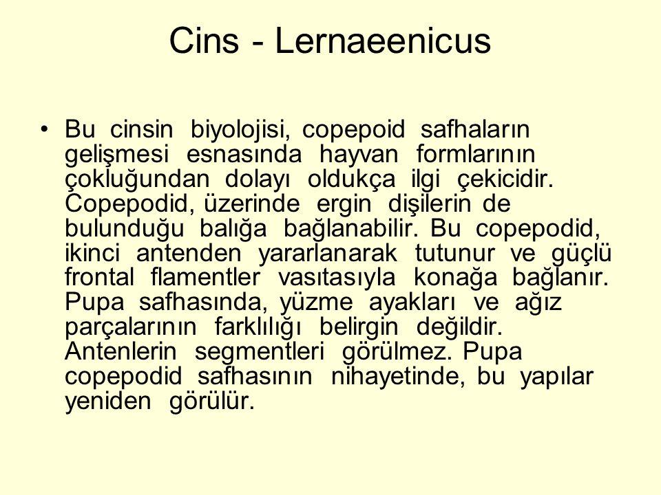 Cins - Lernaeenicus Bu cinsin biyolojisi, copepoid safhaların gelişmesi esnasında hayvan formlarının çokluğundan dolayı oldukça ilgi çekicidir.